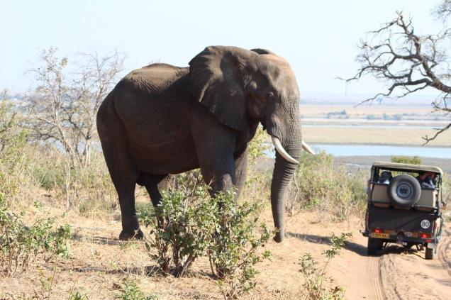 ElephantAndJeep